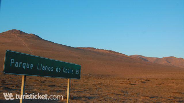 llanos-challe-y-el-desierto-florido-0
