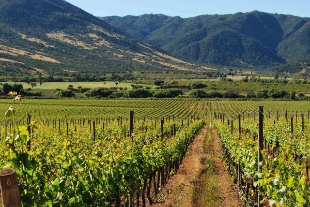valle-de-colchagua_4037-e1448466749538.jpg