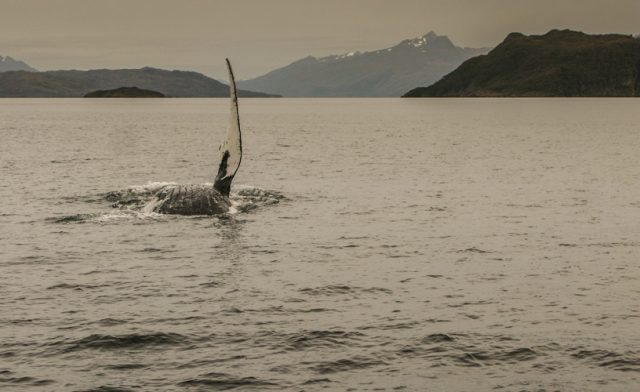 ballenas-punta-arenas-6