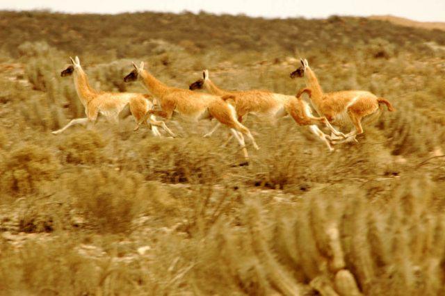 Parque-Nacional-Llanos-de-Challe-Atacama