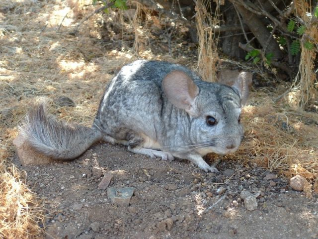 reserva_nacional_las_chinchillas